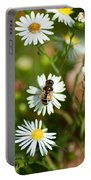 Adult Female Drone Fly Aka Bee Mimic Portable Battery Charger