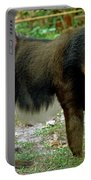 Adult Male Mandrill Papio Sphinx Portable Battery Charger