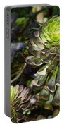 Aeonium Glow Portable Battery Charger