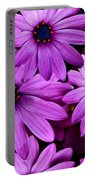 African Daisy Photo Digital Art Portable Battery Charger