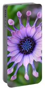 African Daisy - Square Format Portable Battery Charger