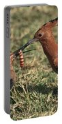 African Hoopoe Feeding Young Portable Battery Charger