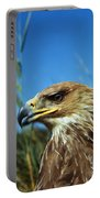 Aigle Imperial Aquila Heliaca Portable Battery Charger