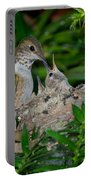 Allens Hummingbird Feeds Young Portable Battery Charger