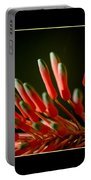 Aloe Bloom Window 2 Portable Battery Charger