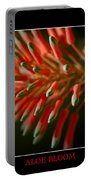 Aloe Bloom Window 3 Portable Battery Charger