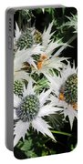 Alpine Eryngium Bourgatii Portable Battery Charger