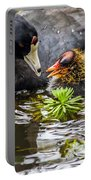 American Coot And Chick Portable Battery Charger