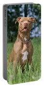 American Pit Bull Terrier Portable Battery Charger