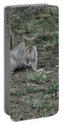 Gray Squirrel Among The Pine Cones Portable Battery Charger