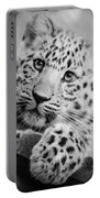 Amur Leopard Cub Portrait Portable Battery Charger