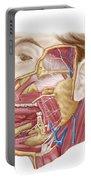 Anatomy Of Human Salivary Glands Portable Battery Charger