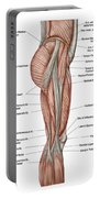 Anatomy Of Human Thigh Muscles Portable Battery Charger