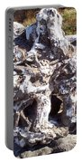 Ancient Gnarled Driftwood - Oregon Beach Portable Battery Charger