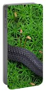 Anerythristic Red Belly Snake Portable Battery Charger
