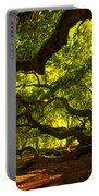 Angel Oak Limbs Crop 40 Portable Battery Charger