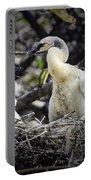 Anhinga Chicks Portable Battery Charger