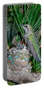 Annas Hummingbird With Young Portable Battery Charger