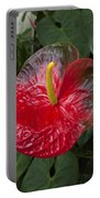Anthurium Flamingo Flower Beauty Queen Fine Art Photography Print Portable Battery Charger