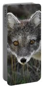 Arctic Fox In Summer Coat Portable Battery Charger