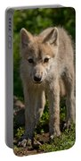 Arctic Wolf Pictures 345 Portable Battery Charger