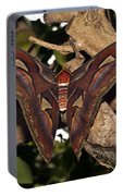 Atlas Moth Portable Battery Charger