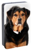 Attentive Labrador Dog Portable Battery Charger