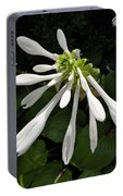 August Lily Portable Battery Charger
