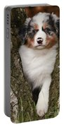 Australian Shepherd Puppy Portable Battery Charger
