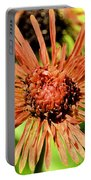 Autumn's Gerber Daisy Portable Battery Charger