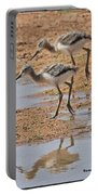 Baby Avocets At Grp Portable Battery Charger