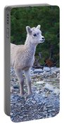 Baby Big Horn Sheep Portable Battery Charger