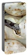 Baby Black Rat Snake Portable Battery Charger