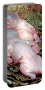 Baby Eastern Gray Squirrels Portable Battery Charger
