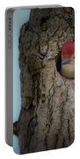 Baby Red Bellied Woodpecker Portable Battery Charger