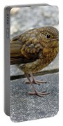 Baby Robin Feeding Portable Battery Charger