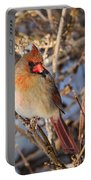Backyard Birds Female Nothern Cardinal Square Portable Battery Charger