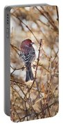 Backyard Birds Male House Finch Portable Battery Charger