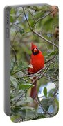 Backyard Cardinal In Tree Portable Battery Charger