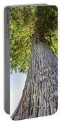 Bald Cypress In Morning Light Portable Battery Charger