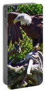 Bald Eagle With A Broken Wing In Salmonier Nature Park-nl Portable Battery Charger