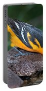 Baltimore Oriole Drinking Portable Battery Charger