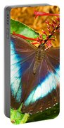 Banded Morpho Butterfly Portable Battery Charger