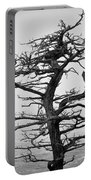 Bare Cypress Portable Battery Charger