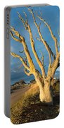 Bare Tree On The Spit Portable Battery Charger