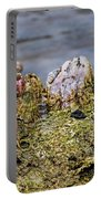 Barnacles Portable Battery Charger