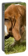 Basset Hound Sniffing Portable Battery Charger