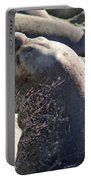 Bull Elephant Seal Battle Scars Portable Battery Charger