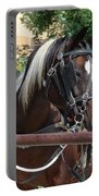 Bay Pinto Amish Buggy Horse Portable Battery Charger