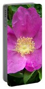 Pink Beach Rose Fully In Bloom Portable Battery Charger